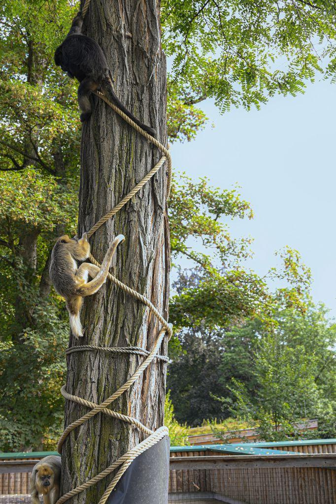 Welser Tiergarten Affen klettern auf Baum